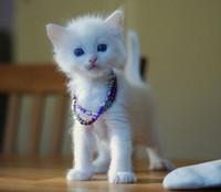 Liten söt kattunge från tidigare kull. 6306850d0b7c3